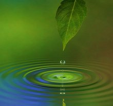 CONDITIONS TREATED. Library Image: Leaf and Water